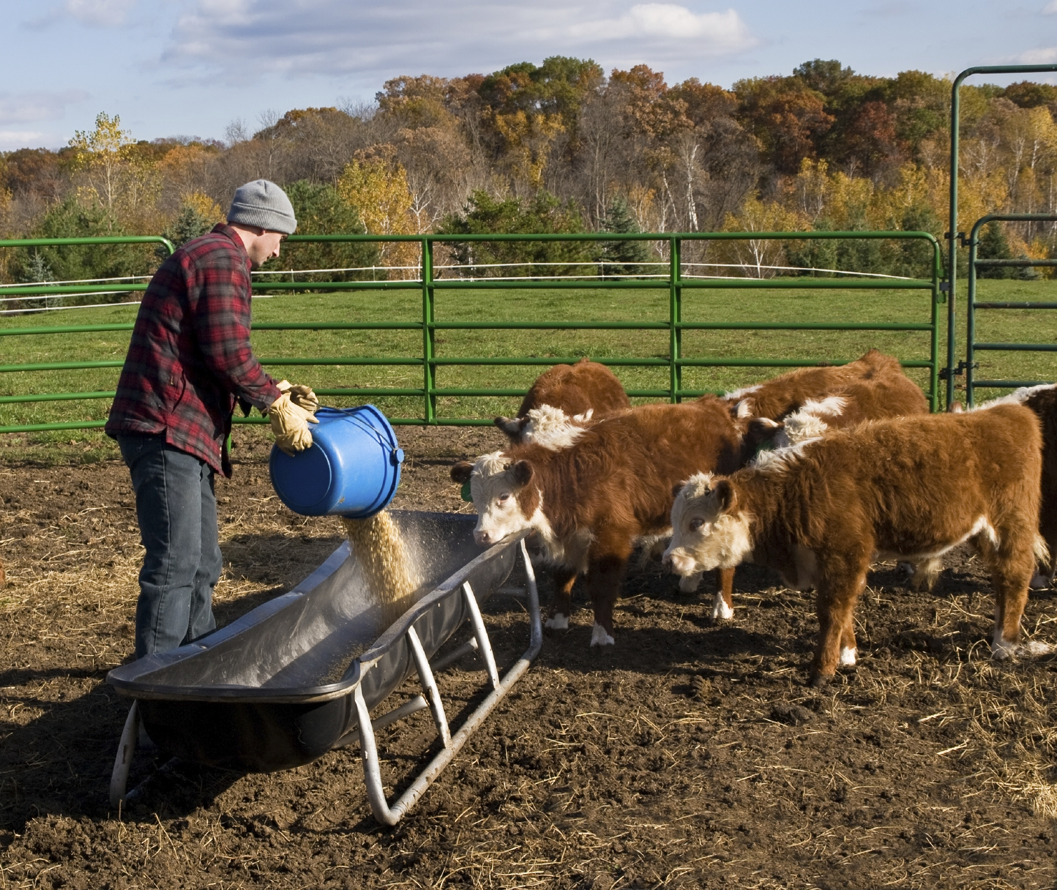 Feed: Animal Feed And Automobiles Make The San Joaquin Valley A